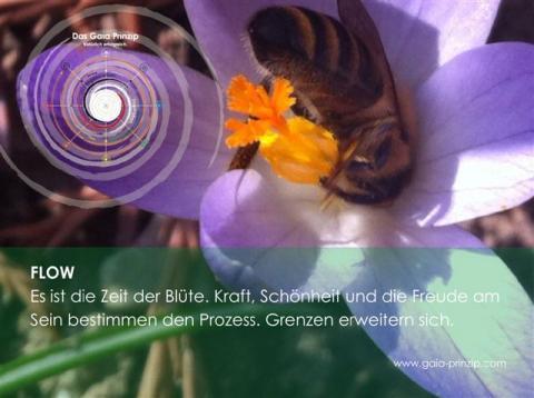 Gaia-Karte Flow, Gaia-Akademie
