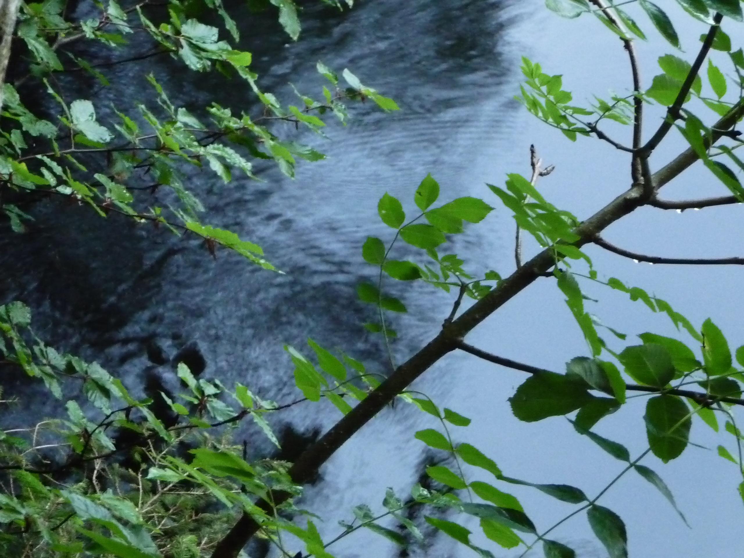 Grüne Zweige über dunklem Wasser